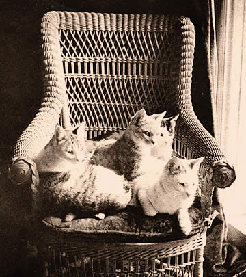 Mark Twains katter